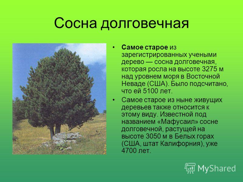 Секвойя гигантская Самым массивным деревом, растущим на Земле, является экземпляр секвойи гигантской, который называют «Генерал Шерман». Это дерево растет в Национальном парке секвой (США, штат Калифорния), его высота 83,8 м, обхват ствола на уровне