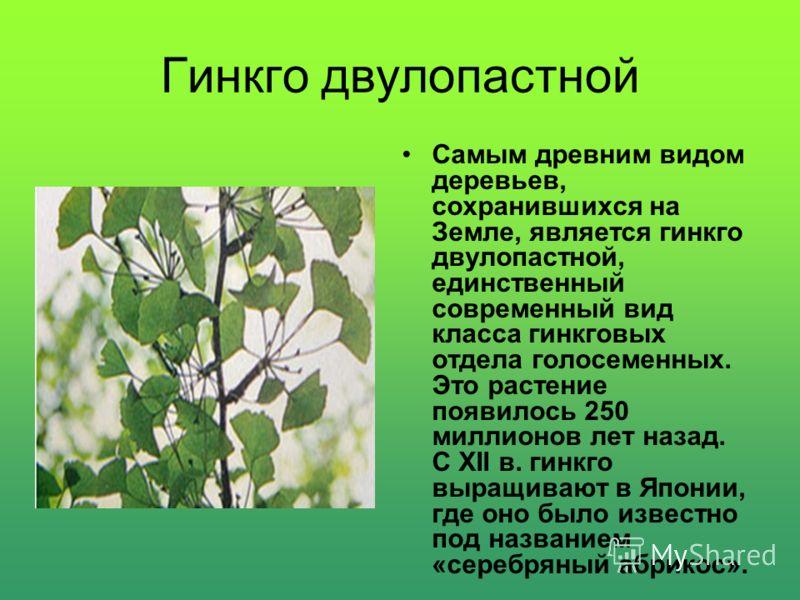 Деревья -долгожители Платан из города Ордубада (Азербайджан) ему более 2 тысяч лет; Дуб под названием «Стелмужский старик» (Литва) ему около 2 тысяч лет; Тис ягодный из Крыма (растет вблизи горы АЙ-Петри) ему около 1200 лет; Липа из парка города Свет