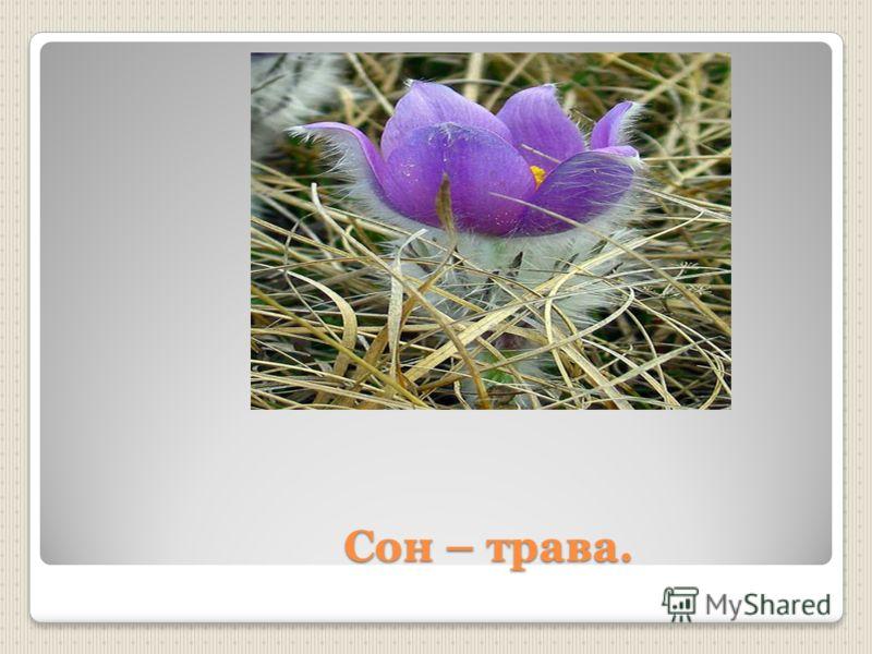 Сон – трава. Сон – трава.