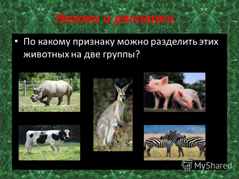 Назови и расскажи. По какому признаку можно разделить этих животных на две группы?