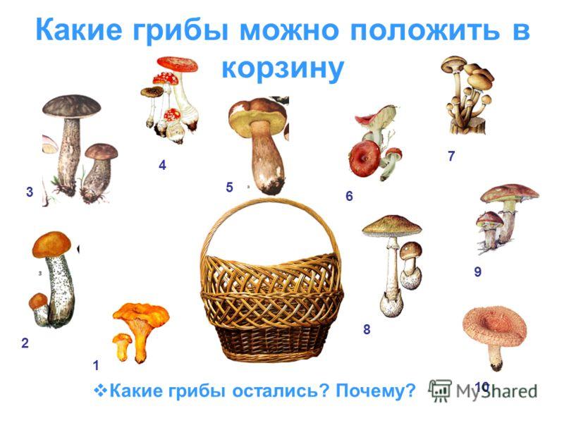 Какие грибы можно положить в корзину Какие грибы остались? Почему? 1 2 3 4 5 6 7 8 9 10