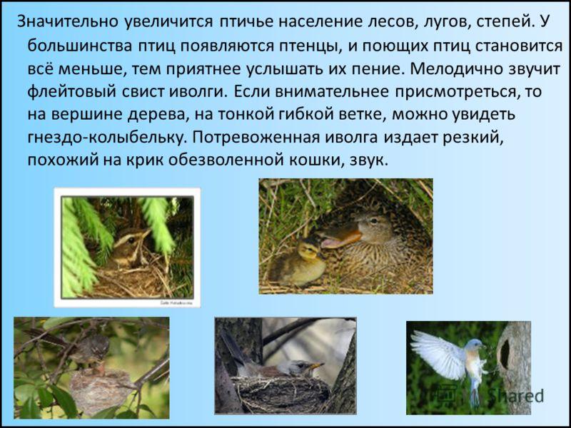 Значительно увеличится птичье население лесов, лугов, степей. У большинства птиц появляются птенцы, и поющих птиц становится всё меньше, тем приятнее услышать их пение. Мелодично звучит флейтовый свист иволги. Если внимательнее присмотреться, то на в