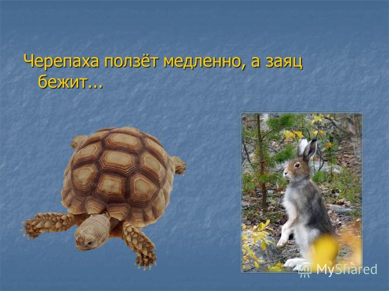 Черепаха ползёт медленно, а заяц бежит...