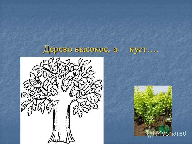 Дерево высокое, а куст…. Дерево высокое, а куст….