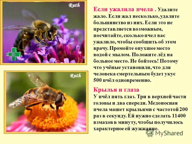 Если ужалила пчела. Удалите жало. Если жал несколько, удалите большинство из них. Если это не представляется возможным, посчитайте, сколько пчел вас ужалило, чтобы сообщить об этом врачу. Промойте опухшее место водой с мылом. Положите лёд на больное