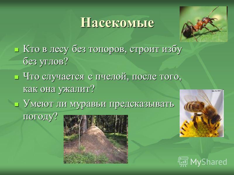 Насекомые Кто в лесу без топоров, строит избу без углов? Кто в лесу без топоров, строит избу без углов? Что случается с пчелой, после того, как она ужалит? Что случается с пчелой, после того, как она ужалит? Умеют ли муравьи предсказывать погоду? Уме