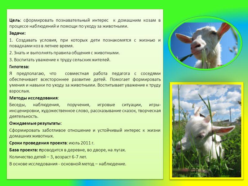 Цель: сформировать познавательный интерес к домашним козам в процессе наблюдений и помощи по уходу за животными. Задачи: 1. Создавать условия, при которых дети познакомятся с жизнью и повадками коз в летнее время. 2. Знать и выполнять правила общения