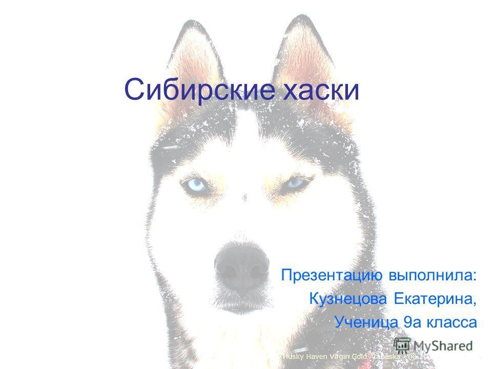 Сибирские хаски Презентацию выполнила: Кузнецова Екатерина, Ученица 9а класса
