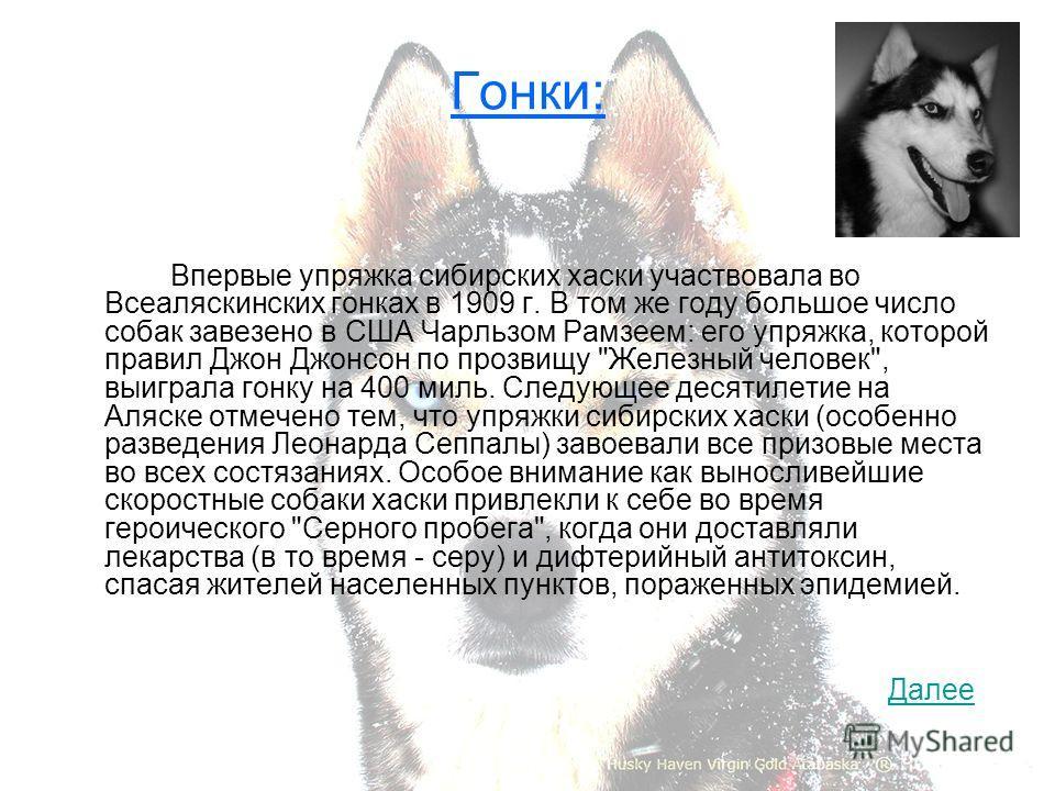 Гонки: Впервые упряжка сибирских хаски участвовала во Всеаляскинских гонках в 1909 г. В том же году большое число собак завезено в США Чарльзом Рамзеем: его упряжка, которой правил Джон Джонсон по прозвищу