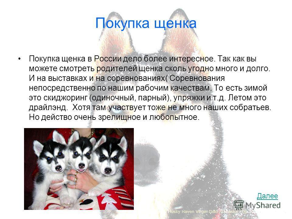 Покупка щенка Покупка щенка в России дело более интересное. Так как вы можете смотреть родителей щенка сколь угодно много и долго. И на выставках и на соревнованиях( Соревнования непосредственно по нашим рабочим качествам. То есть зимой это скиджорин