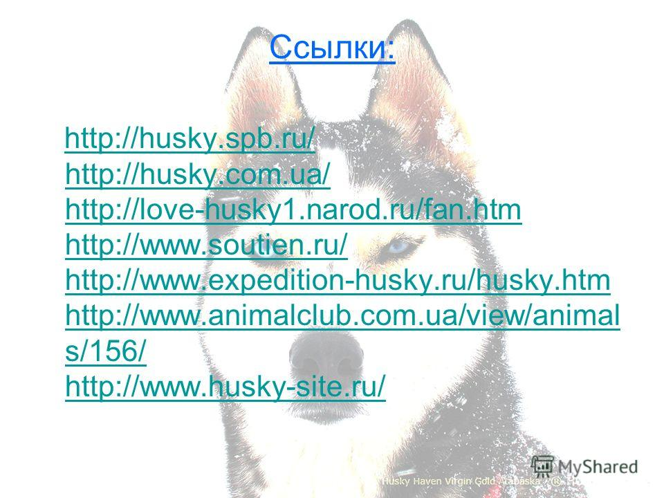 Ссылки: http://husky.spb.ru/ http://husky.com.ua/ http://love-husky1.narod.ru/fan.htm http://www.soutien.ru/ http://www.expedition-husky.ru/husky.htm http://www.animalclub.com.ua/view/animal s/156/ http://www.husky-site.ru/http://husky.spb.ru/ http:/