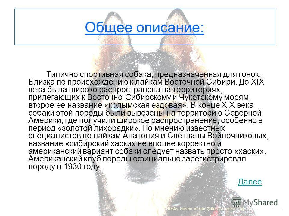 Общее описание: Типично спортивная собака, предназначенная для гонок. Близка по происхождению к лайкам Восточной Сибири. До XIX века была широко распространена на территориях, прилегающих к Восточно-Сибирскому и Чукотскому морям, второе ее название «