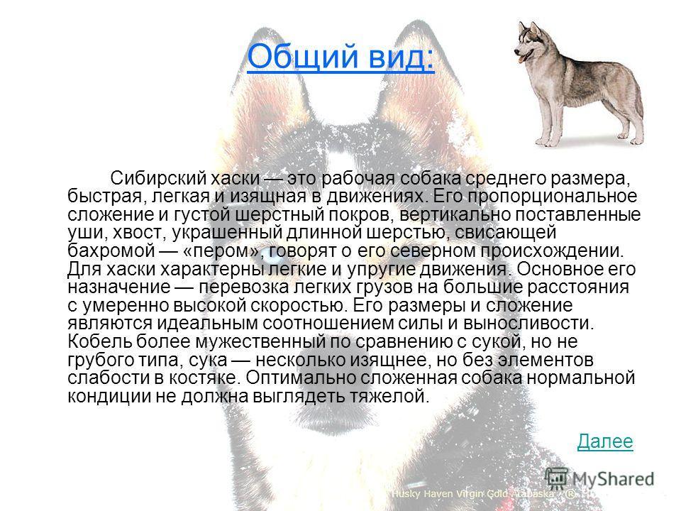 Общий вид: Сибирский хаски это рабочая собака среднего размера, быстрая, легкая и изящная в движениях. Его пропорциональное сложение и густой шерстный покров, вертикально поставленные уши, хвост, украшенный длинной шерстью, свисающей бахромой «пером»