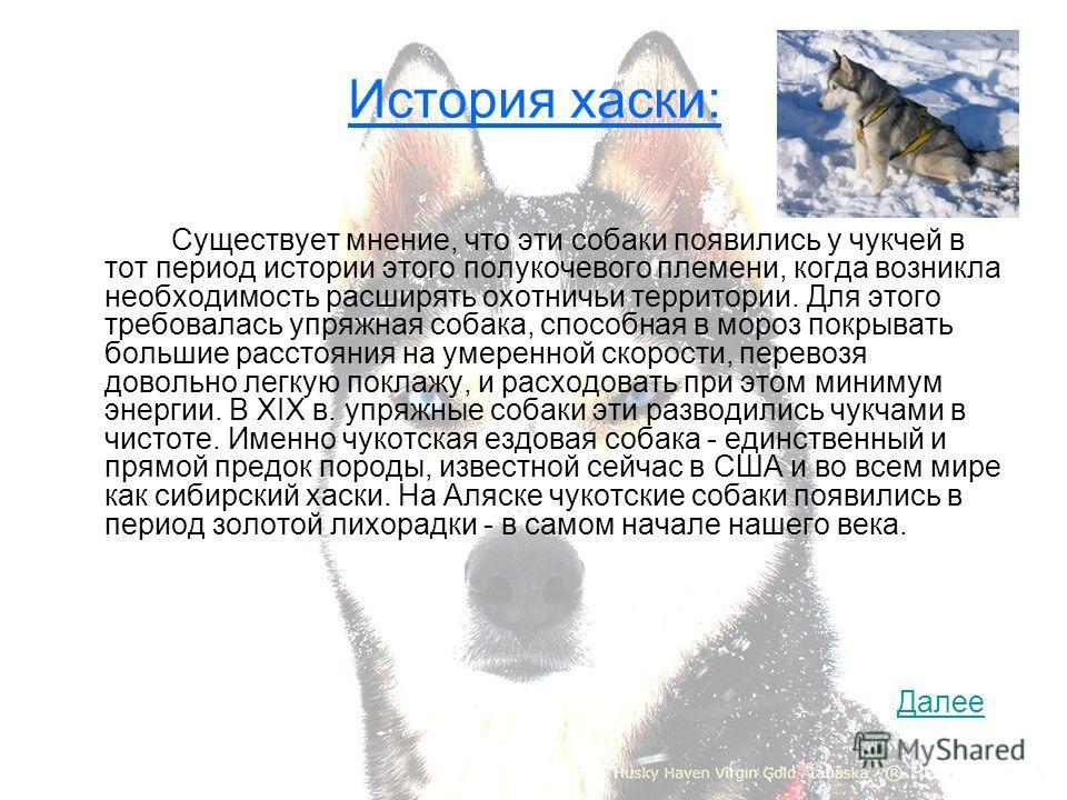 История хаски: Существует мнение, что эти собаки появились у чукчей в тот период истории этого полукочевого племени, когда возникла необходимость расширять охотничьи территории. Для этого требовалась упряжная собака, способная в мороз покрывать больш