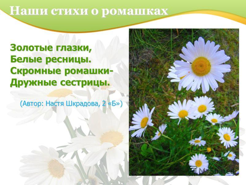 Золотые глазки, Белые ресницы. Скромные ромашки- Дружные сестрицы. (Автор: Настя Шкрадова, 2 «Б») Наши стихи о ромашках