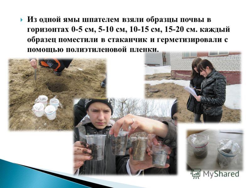 Из одной ямы шпателем взяли образцы почвы в горизонтах 0-5 см, 5-10 см, 10-15 см, 15-20 см. каждый образец поместили в стаканчик и герметизировали с помощью полиэтиленовой пленки.