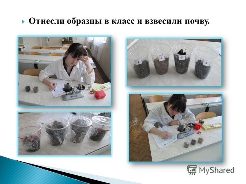 Отнесли образцы в класс и взвесили почву.