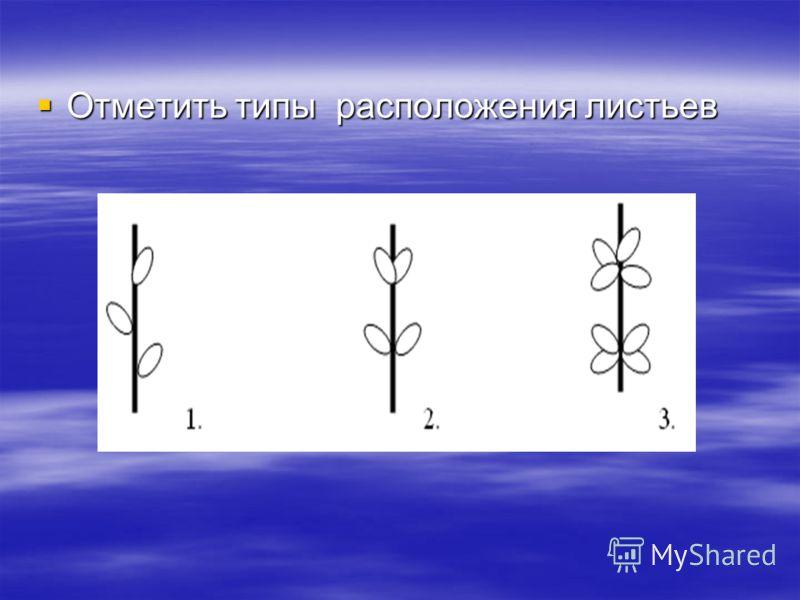 Отметить типы расположения листьев Отметить типы расположения листьев