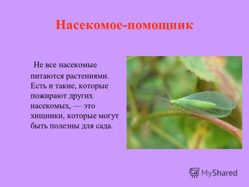 Насекомое-помощник Не все насекомые питаются растениями. Есть и такие, которые пожирают других насекомых, это хищники, которые могут быть полезны для сада.