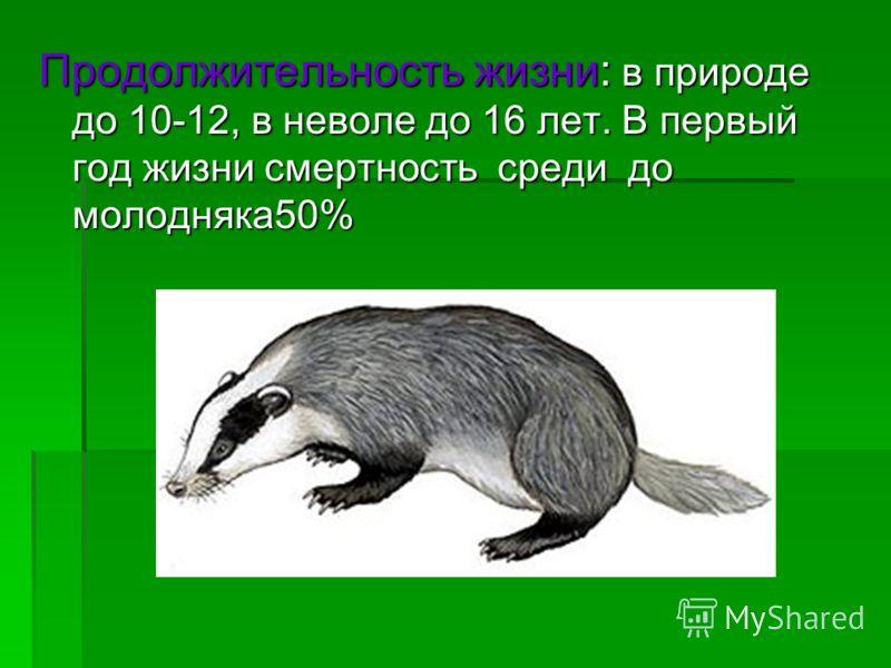 Продолжительность жизни: в природе до 10-12, в неволе до 16 лет. В первый год жизни смертность среди до молодняка50%