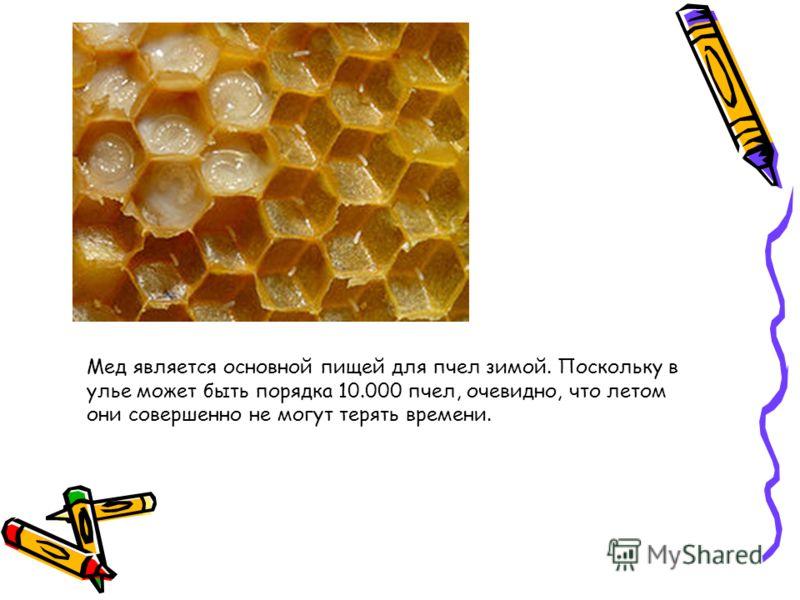 Мед является основной пищей для пчел зимой. Поскольку в улье может быть порядка 10.000 пчел, очевидно, что летом они совершенно не могут терять времени.