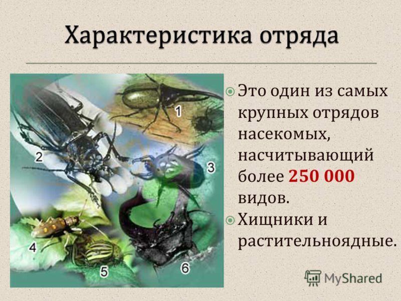 Это один из самых крупных отрядов насекомых, насчитывающий более 250 000 видов. Хищники и растительноядные.