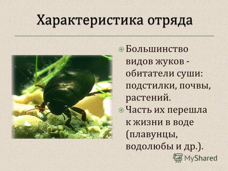 Большинство видов жуков - обитатели суши : подстилки, почвы, растений. Часть их перешла к жизни в воде ( плавунцы, водолюбы и др.).