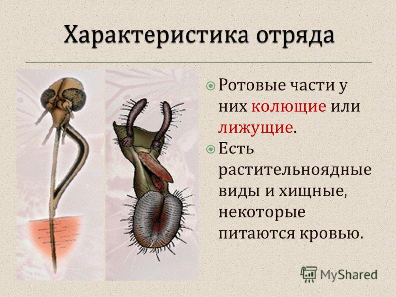 Ротовые части у них колющие или лижущие. Есть растительноядные виды и хищные, некоторые питаются кровью.