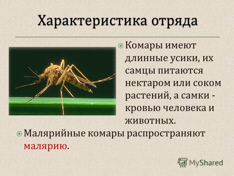 Комары имеют длинные усики, их самцы питаются нектаром или соком растений, а самки - кровью человека и животных. Малярийные комары распространяют малярию.