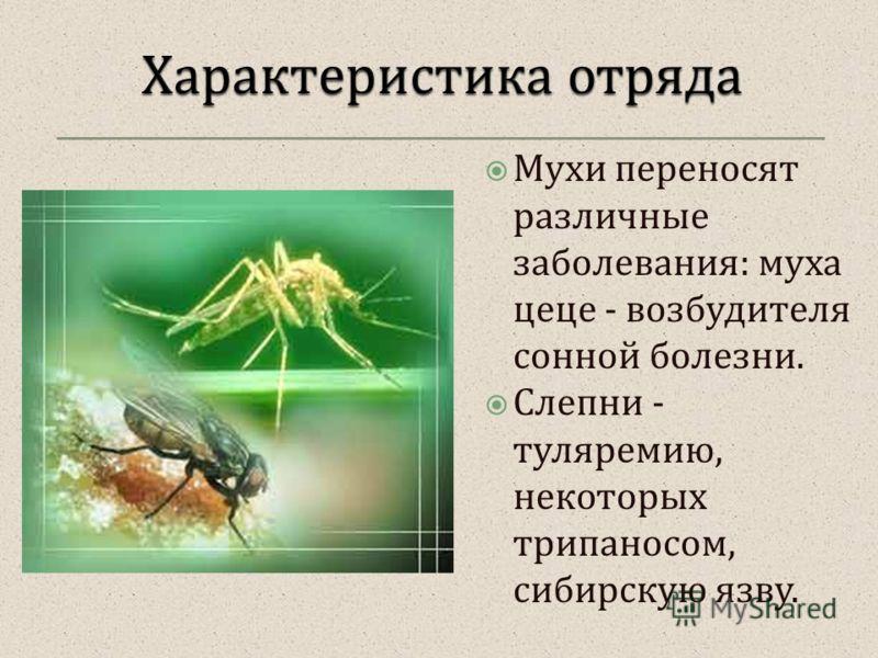 Мухи переносят различные заболевания : муха цеце - возбудителя сонной болезни. Слепни - туляремию, некоторых трипаносом, сибирскую язву.