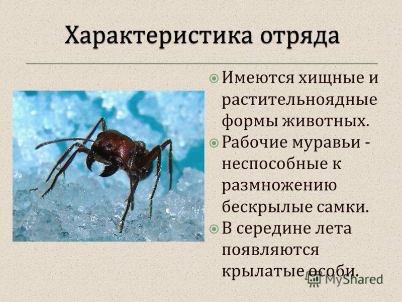 Имеются хищные и растительноядные формы животных. Рабочие муравьи - неспособные к размножению бескрылые самки. В середине лета появляются крылатые особи.