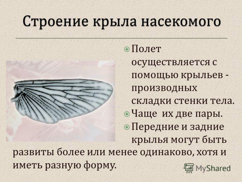 Полет осуществляется с помощью крыльев - производных складки стенки тела. Чаще их две пары. Передние и задние крылья могут быть развиты более или менее одинаково, хотя и иметь разную форму.