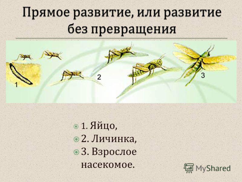 1. Яйцо, 2. Личинка, 3. Взрослое насекомое.