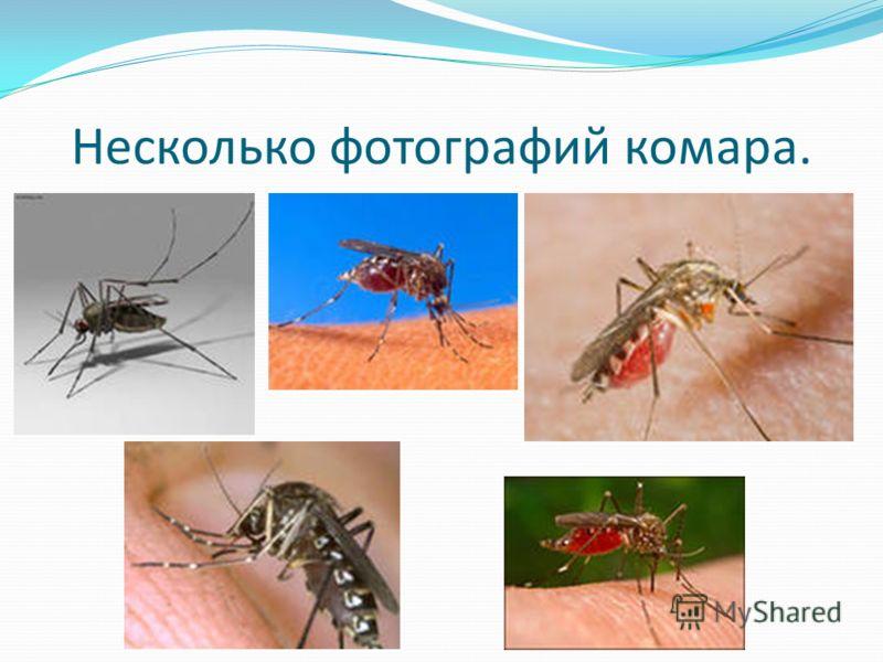 Несколько фотографий комара.