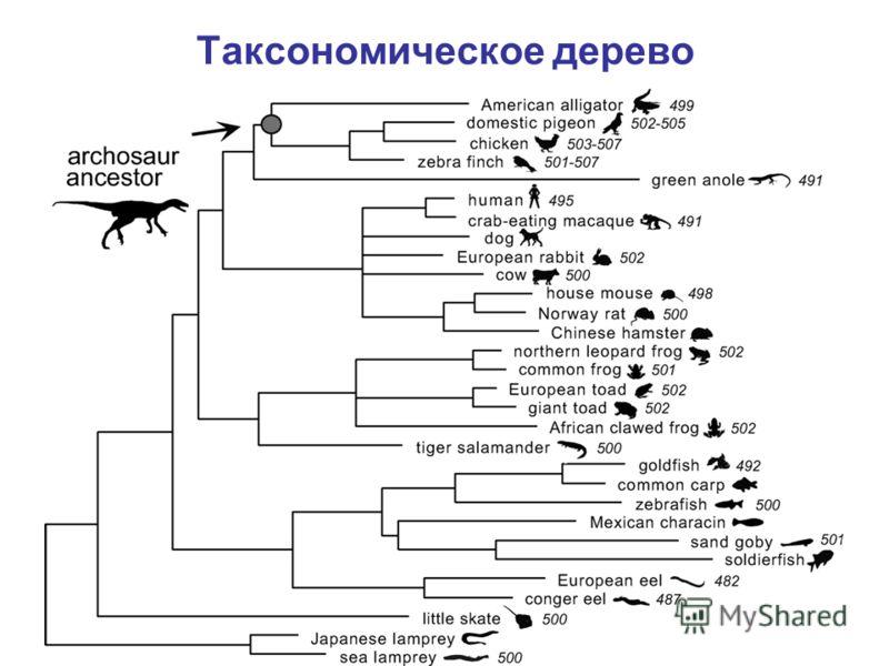 Таксономическое дерево