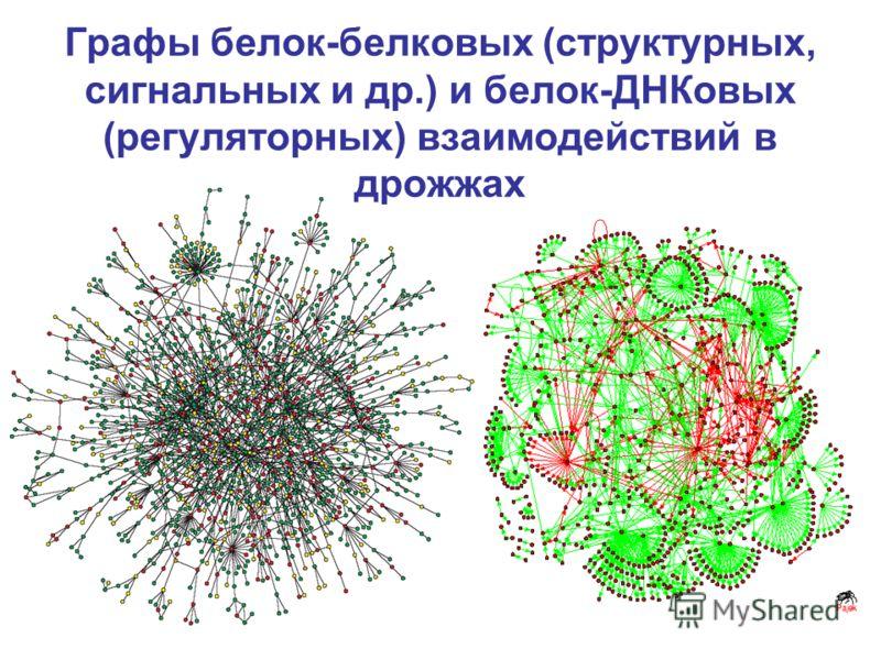 Графы белок-белковых (структурных, сигнальных и др.) и белок-ДНКовых (регуляторных) взаимодействий в дрожжах