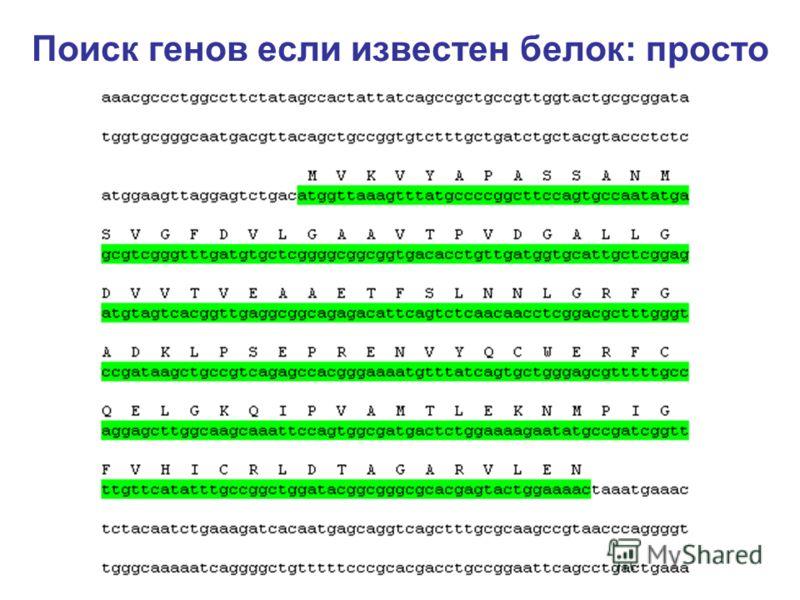 Поиск генов если известен белок: просто