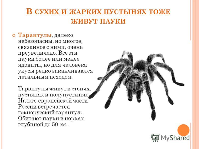 В СУХИХ И ЖАРКИХ ПУСТЫНЯХ ТОЖЕ ЖИВУТ ПАУКИ Тарантулы, далеко небезопасны, но многое, связанное с ними, очень преувеличено. Все эти пауки более или менее ядовиты, но для человека укусы редко заканчиваются летальным исходом. Тарантулы живут в степях, п