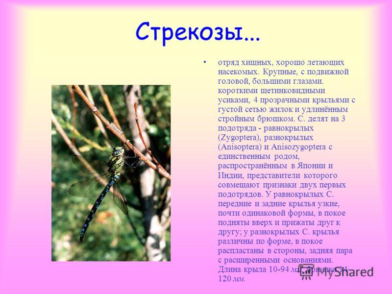 Личинки стрекоз... В пруду, в озере, в реке живут еще и личинки стрекоз. Это тоже очень прожорливые и агрессивные хищники, и держать их нельзя не только в одном аквариуме с другими рыбками, но и друг с другом. Обнаружить личинки стрекоз в водоеме лег