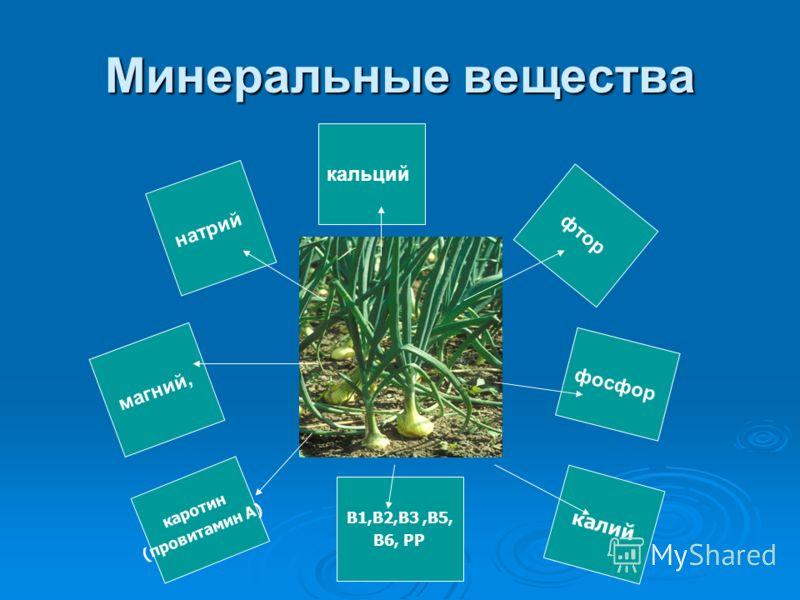натрий магний, фосфор фтор кальций Минеральные вещества В1,В2,В3,В5, В6, РР калий каротин (провитамин А)