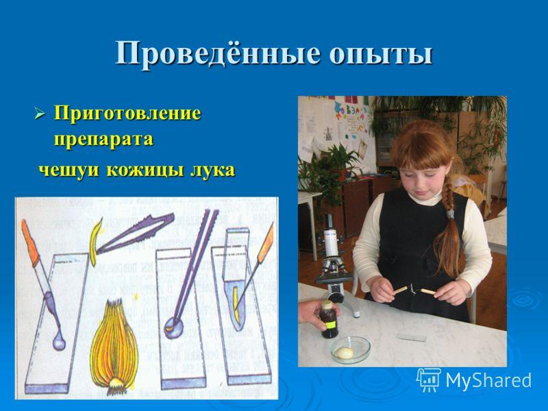 Проведённые опыты Приготовление препарата Приготовление препарата чешуи кожицы лука чешуи кожицы лука