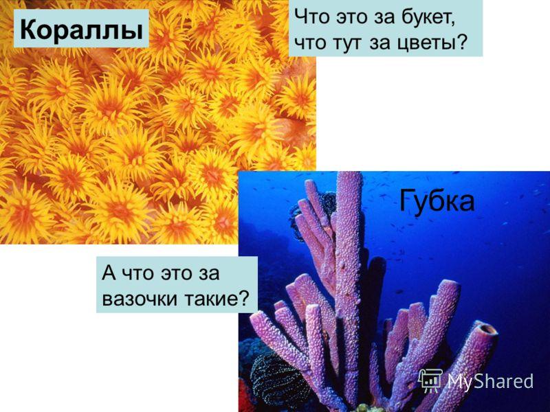 Что это за букет, что тут за цветы? Кораллы А что это за вазочки такие? Губка