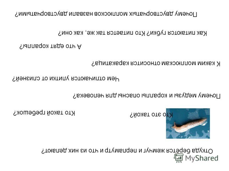 Почему двустворчатых моллюсков назвали двустворчатыми? Как питаются губки? Кто питается так же, как они? А что едят кораллы? К каким моллюскам относится каракатица? Чем отличаются улитки от слизней? Почему медузы и кораллы опасны для человека? Кто та