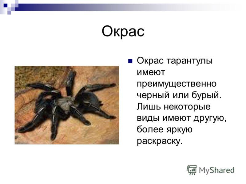 Окрас Окрас тарантулы имеют преимущественно черный или бурый. Лишь некоторые виды имеют другую, более яркую раскраску.
