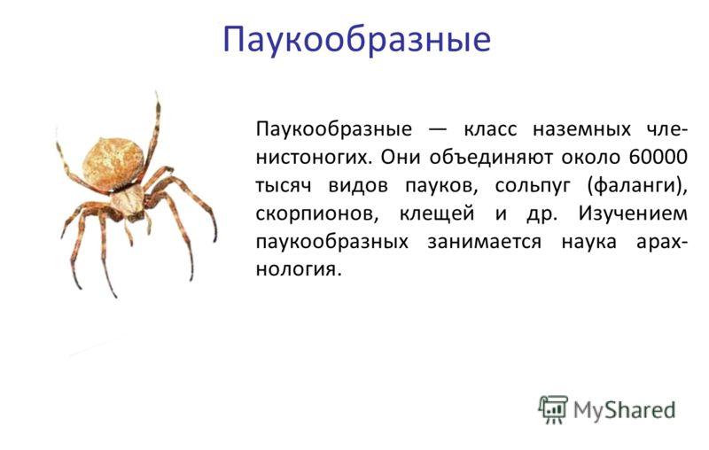 Паукообразные Паукообразные класс наземных чле- нистоногих. Они объединяют около 60000 тысяч видов пауков, сольпуг (фаланги), скорпионов, клещей и др. Изучением паукообразных занимается наука арах- нология.