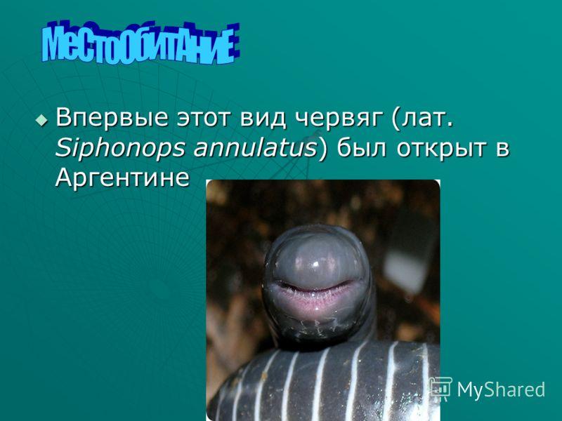 Впервые этот вид червяг (лат. Siphonops annulatus) был открыт в Аргентине Впервые этот вид червяг (лат. Siphonops annulatus) был открыт в Аргентине