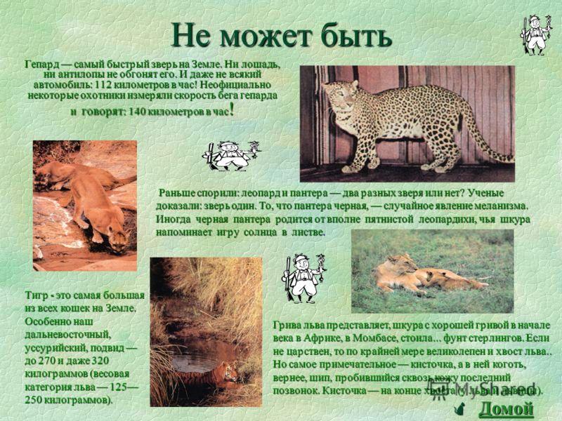 Три типа диких кошек: Первый Первый - включает в себя больших кошек: львов, тигров, леопардов, ягуаров и рысей. Второй Второй - входят все прочие не столь крупные кошки; самые известные среди них - сервал, ливийская и барханная кошки, пума, оцелот, к