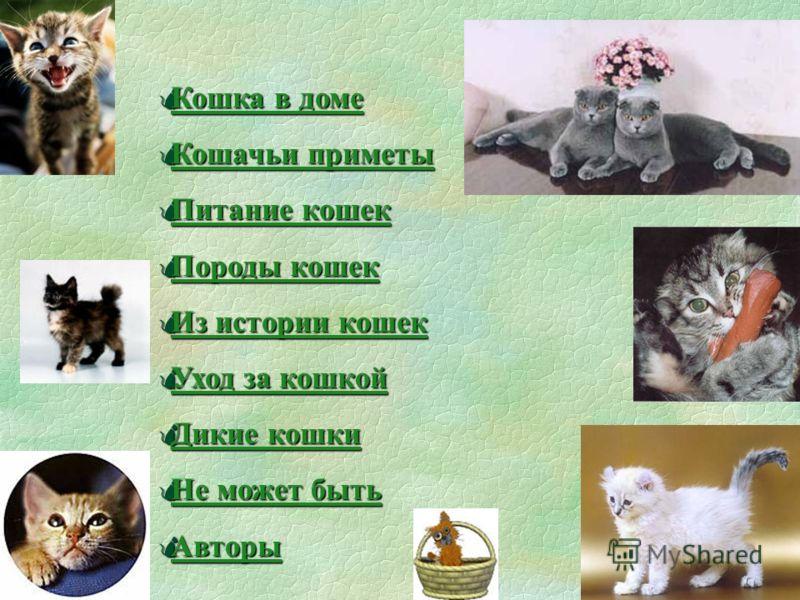 Презентация «Немного о кошках... выполнена преподавателями образовательных учреждений Новосибирской области в рамках проекта Поколение.RU © Новосибирский региональный центр Федерации Интернет Образования, декабрь 2002 г., выпуск 59, группа 2