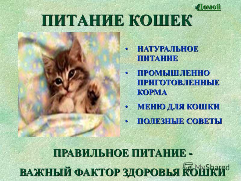 Говорят, не повезет - Если черный кот дорогу перейдет. А пока наоборот - Только черному коту и не везет. Согласно народным поверьям, кошка чувствует всевозможные перемены - как к хорошему, так и к худому. Говорят, что, наблюдая за поведением кошки, м