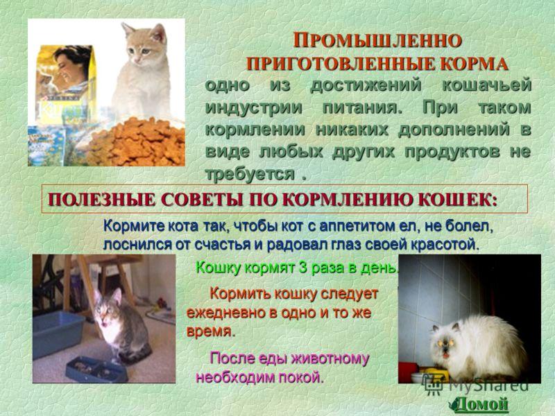 НАТУРАЛЬНОЕ ПИТАНИЕ ЕДА С НАШЕГО СТОЛА ТРАДИЦИОНОЕ КОРМЛЕНИЕ Самый простой способ накормить кошку - это регулярно отдавать ей остатки от нашего завтрака, обеда и ужина. Это натуральные свежие продукты : мясо, рыба, овощи, молочные продукты в ежедневн